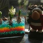 Plante i vase med blandet farver Vandkugler